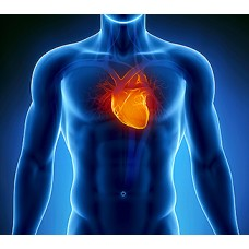 Kardiovaskular